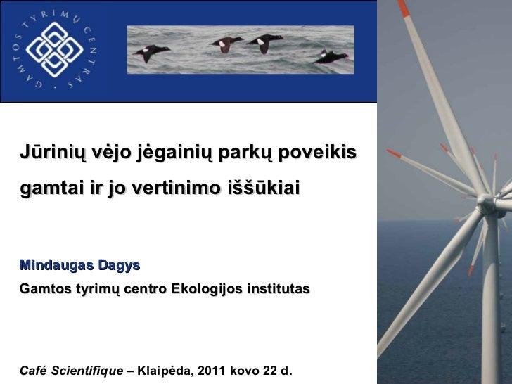 Jūrinių vėjo jėgainių park ų  poveikis gamtai ir jo vertinimo iššūkiai Café Scientifique  –  Klaip ėda, 2011 kovo 22 d. Mi...