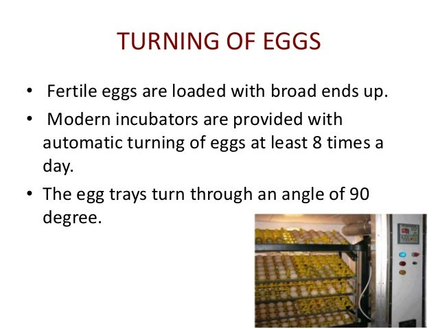 factors affecting eggs hatchability Factors affecting hatchability of eggs the success of the poultry industry depends on how an entrepreneur or famer is determined and focuses on excelling in the field.