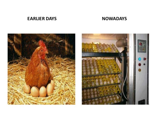 factors affecting eggs hatchability Four experiments were carried out on eggs from broiler breeding flocks between  26 and 60 weeks of age the effects of storage and incubation conditions on.