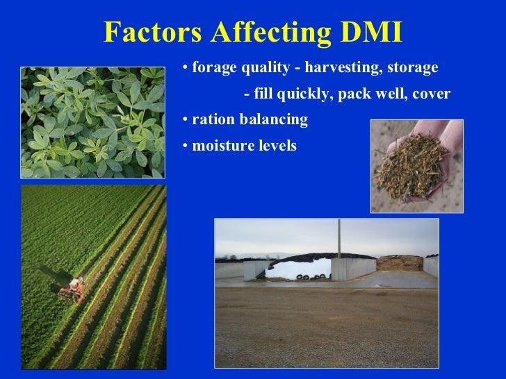 Factors Affecting DMI <ul><li>forage quality - harvesting, storage </li></ul><ul><li>- fill quickly, pack well, cover </li...