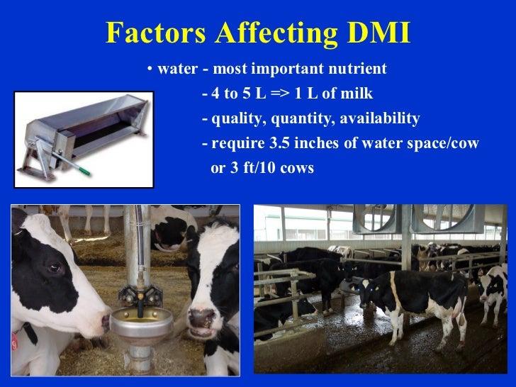 Factors Affecting DMI <ul><li>water - most important nutrient  </li></ul><ul><li>- 4 to 5 L => 1 L of milk </li></ul><ul><...
