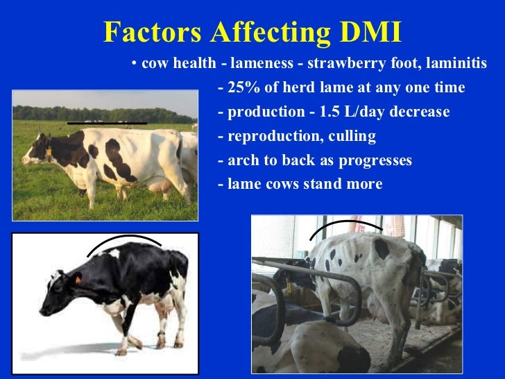Factors Affecting DMI <ul><li>cow health - lameness - strawberry foot, laminitis </li></ul><ul><li>- 25% of herd lame at a...