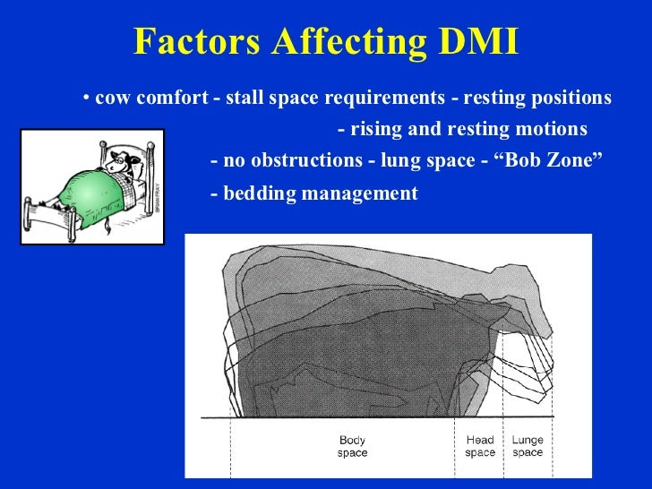 Factors Affecting DMI <ul><li>cow comfort - stall space requirements - resting positions </li></ul><ul><li>- rising and re...