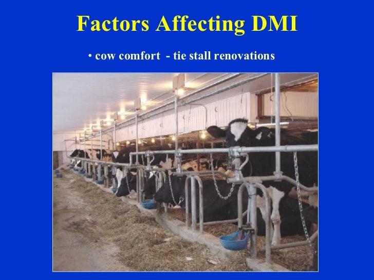 Factors Affecting DMI <ul><li>cow comfort  - tie stall renovations   </li></ul>