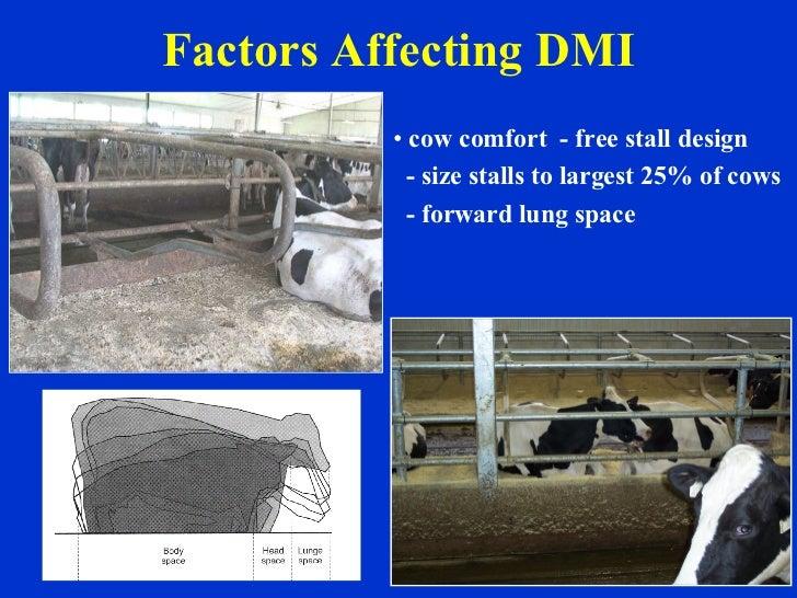 Factors Affecting DMI <ul><li>cow comfort  - free stall design </li></ul><ul><li>- size stalls to largest 25% of cows </li...
