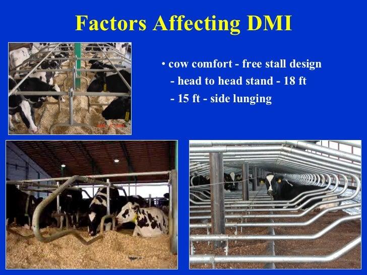 Factors Affecting DMI <ul><li>cow comfort - free stall design </li></ul><ul><li>- head to head stand - 18 ft </li></ul><ul...