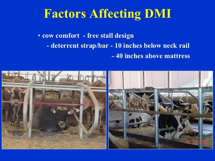 Factors Affecting DMI <ul><li>cow comfort  - free stall design </li></ul><ul><li>- deterrent strap/bar - 10 inches below n...