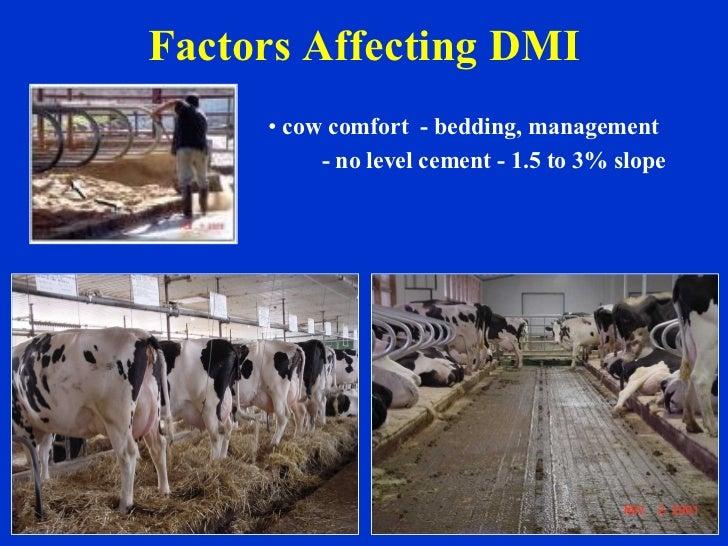 Factors Affecting DMI <ul><li>cow comfort  - bedding, management </li></ul><ul><li>- no level cement - 1.5 to 3% slope </l...