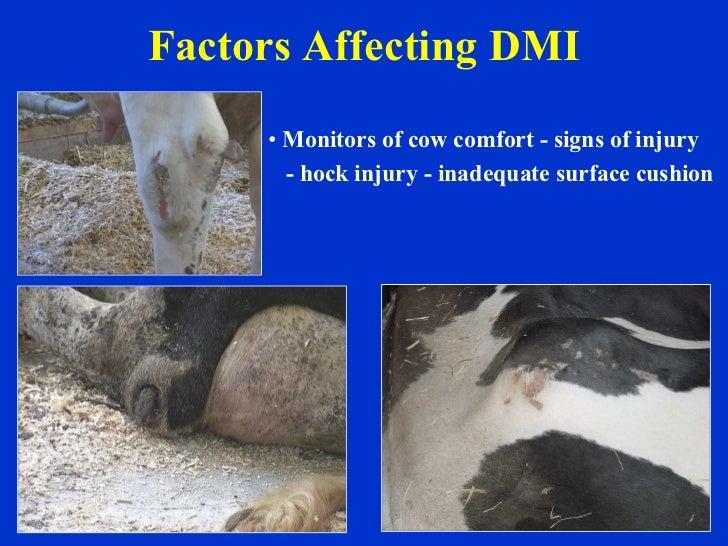 Factors Affecting DMI <ul><li>Monitors of cow comfort - signs of injury </li></ul><ul><li>- hock injury - inadequate surfa...