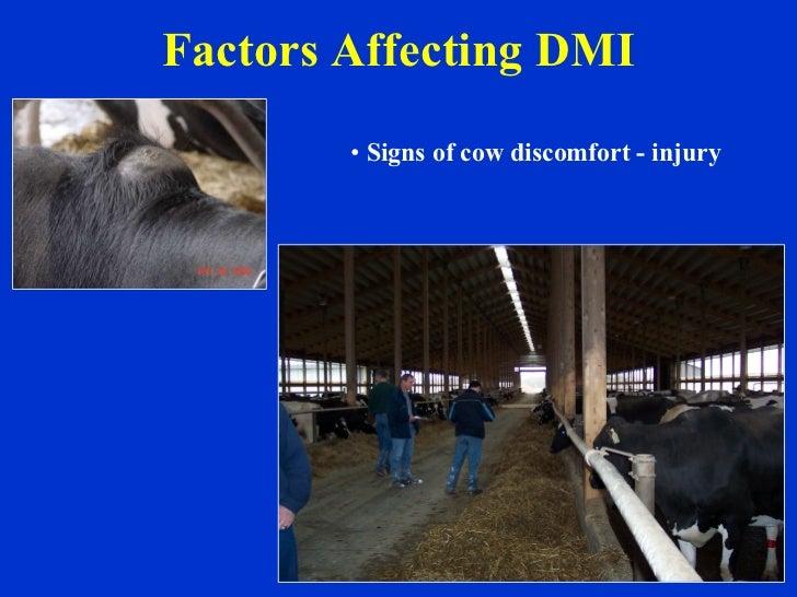 Factors Affecting DMI <ul><li>Signs of cow discomfort - injury </li></ul>