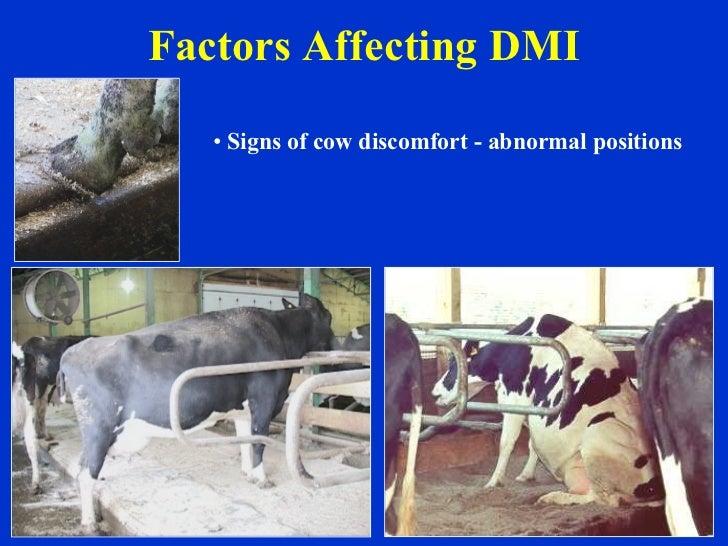 Factors Affecting DMI <ul><li>Signs of cow discomfort - abnormal positions </li></ul>