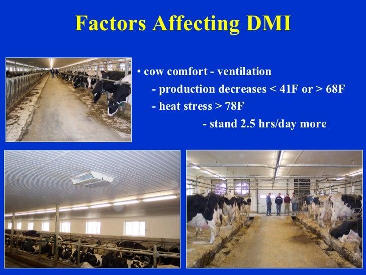 Factors Affecting DMI <ul><li>cow comfort - ventilation </li></ul><ul><li>- production decreases < 41F or > 68F </li></ul>...