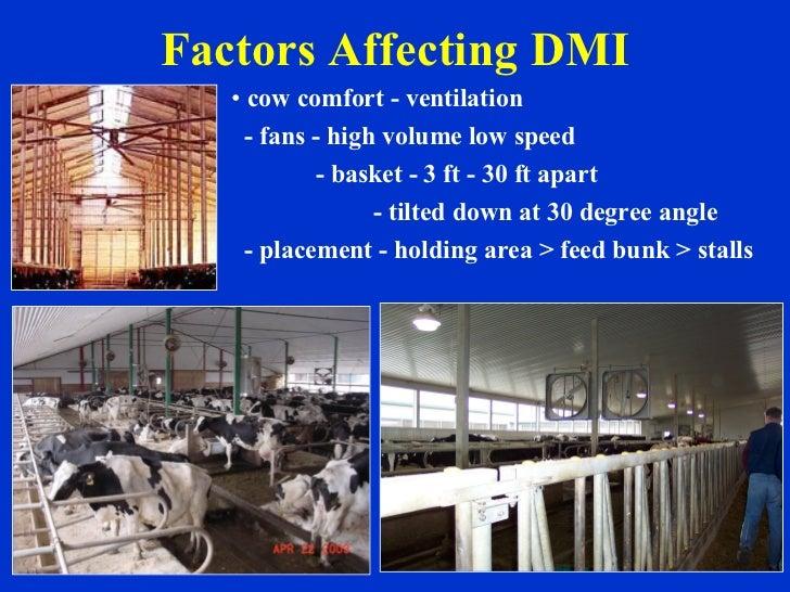 Factors Affecting DMI <ul><li>cow comfort - ventilation  </li></ul><ul><li>- fans - high volume low speed </li></ul><ul><l...
