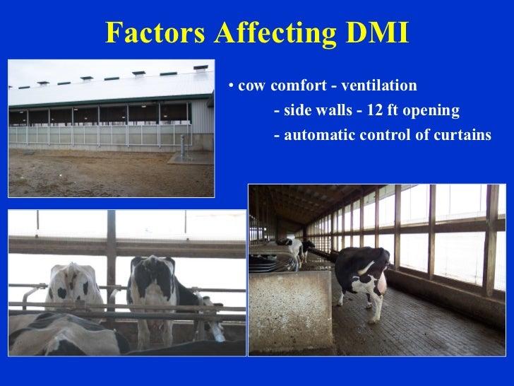 Factors Affecting DMI <ul><li>cow comfort - ventilation </li></ul><ul><li>- side walls - 12 ft opening </li></ul><ul><li>-...