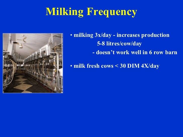Milking Frequency <ul><li>milking 3x/day - increases production </li></ul><ul><li>5-8 litres/cow/day </li></ul><ul><li>- d...