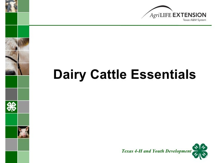 Dairy Cattle Essentials  Texas 4-H and Youth Development