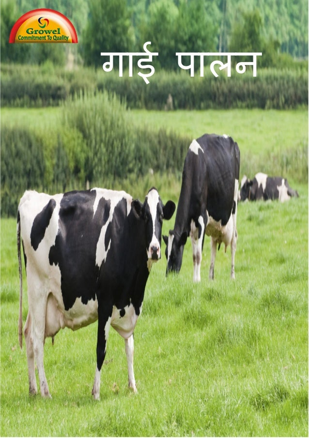 गाई पालन