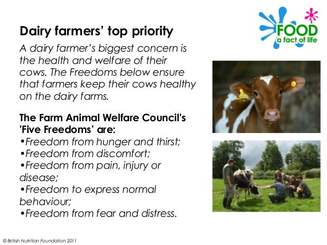dairy farming essay Dairy farming for small farmer  1 why do dairy farming  11 dairying is an important source of subsidiary income to small/marginal.