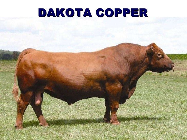 DAKOTA COPPER