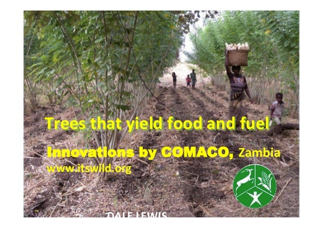 Trees  that  yield  food  and  fuel   Innovations by COMACO, Zambia www.itswild.org   DALE  LEWIS