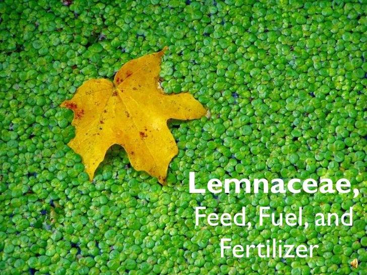 Lemnaceae, Feed, Fuel, and Fertilizer