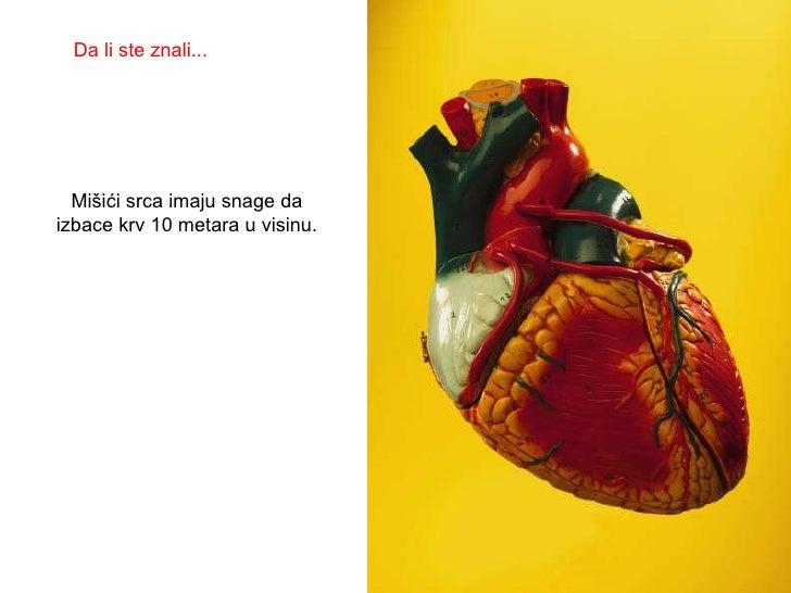 Mišići srca imaju snage da izbace krv 10 metara u visinu. Da li ste znali...