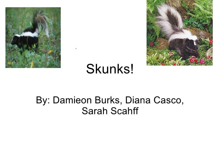 Skunks! By: Damieon Burks, Diana Casco, Sarah Scahff