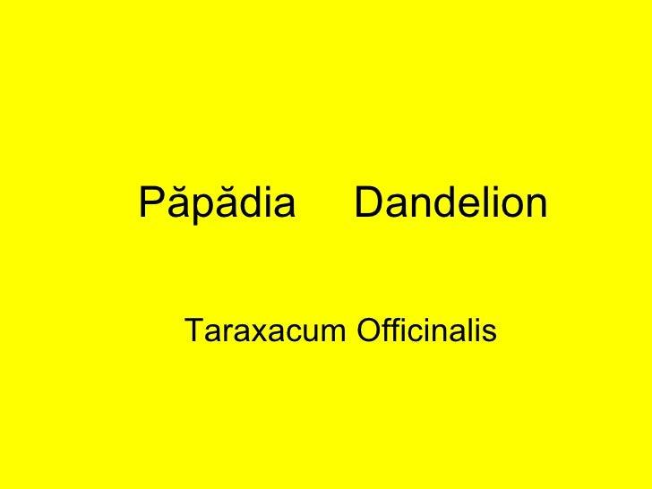 Păpădia   Dandelion Taraxacum Officinalis