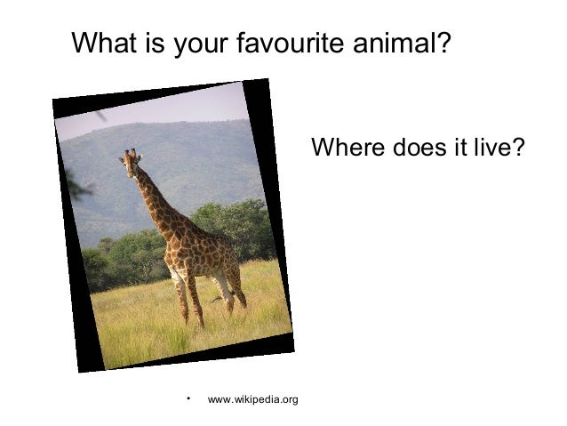 What is your favourite animal? • www.wikipedia.org Where does it live?