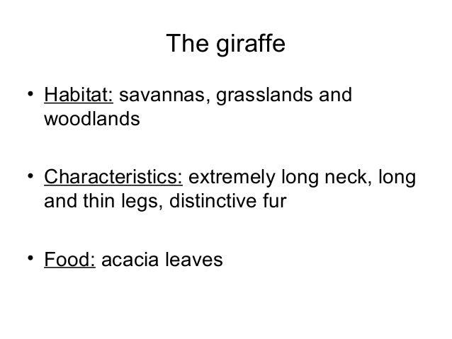 The giraffe • Habitat: savannas, grasslands and woodlands • Characteristics: extremely long neck, long and thin legs, dist...