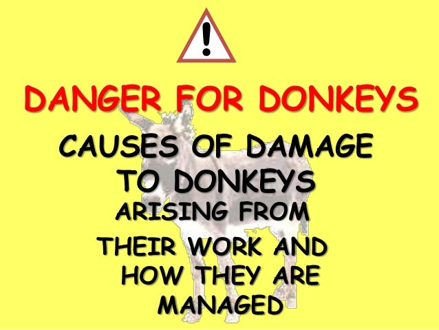 CAUSES OF DAMAGE TO DONKEYS ARISING FROM THEIR WORK AND HOW THEY ARE MANAGED ! DANGER FOR DONKEYS