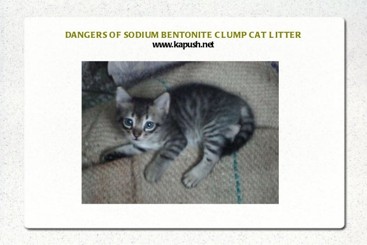 What Cat Litter Uses Bentonite