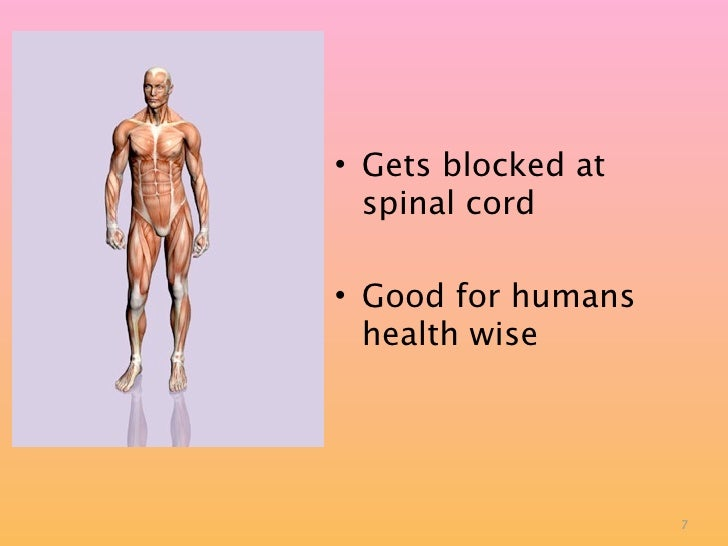 • Gets blocked at   spinal cord  • Good for humans   health wise                         7