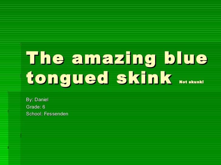 The amazing blue tongued skink  Not skunk! By: Daniel Grade: 6 School: Fessenden