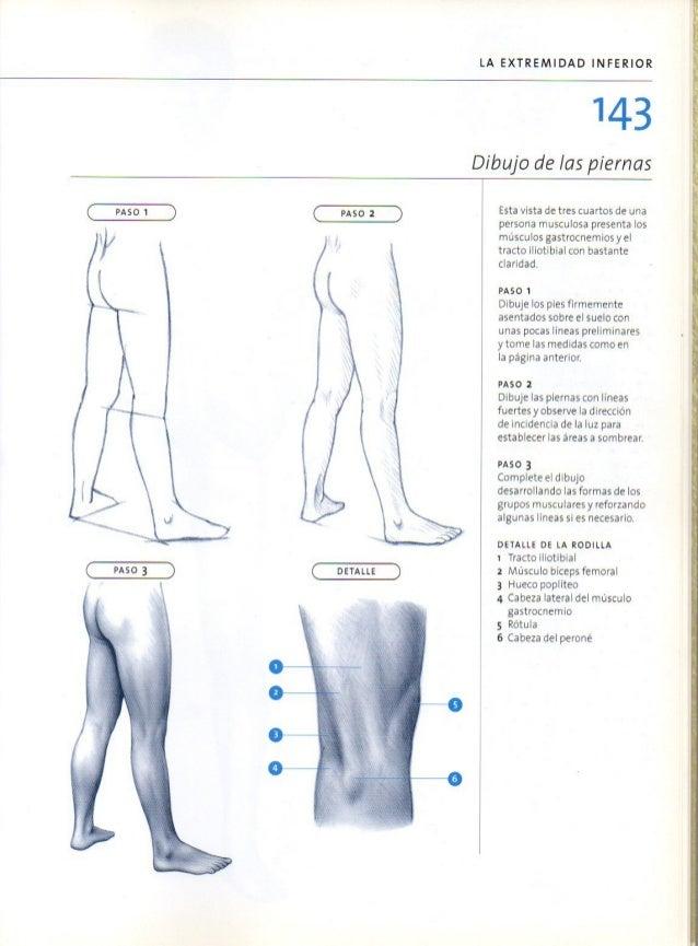Lujo La Forma De Estudiar La Anatomía De Los Músculos Galería ...