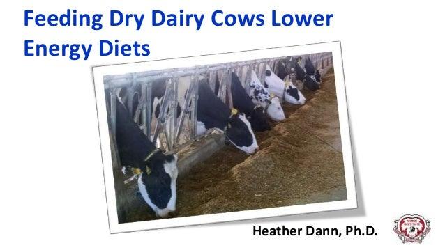 Feeding Dry Dairy Cows Lower Energy Diets Heather Dann, Ph.D.