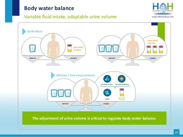 10 Body water balance Variable fluid intake, adaptable urine volume The adjustment of urine volume is critical to regulate...