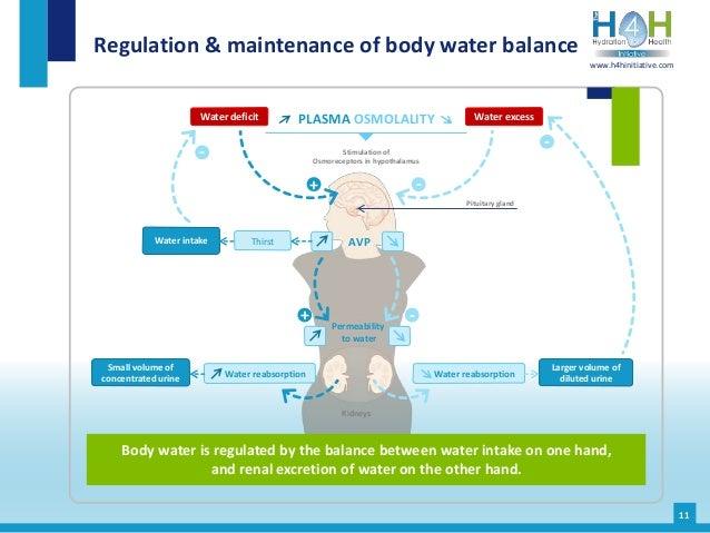 Regulation & maintenance of body water balance Body water is regulated by the balance between water intake on one hand, an...