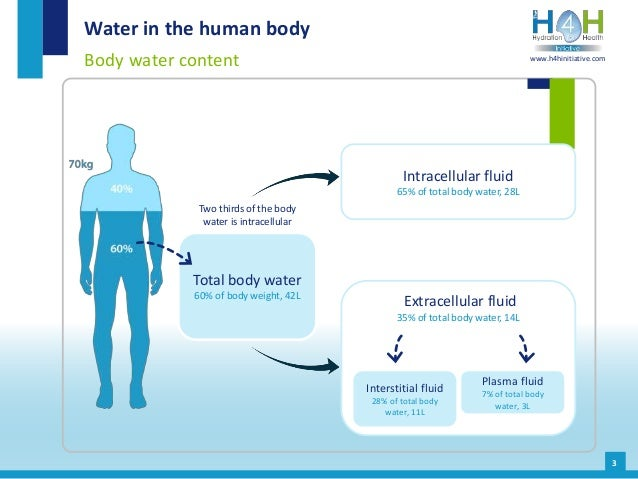 Extracellular fluid 35% of total body water, 14L Intracellular fluid 65% of total body water, 28L Interstitial fluid 28% o...