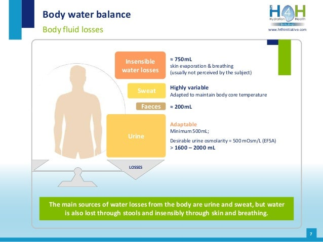 7 Body water balance Body fluid losses The main sources of water losses from the body are urine and sweat, but water is al...