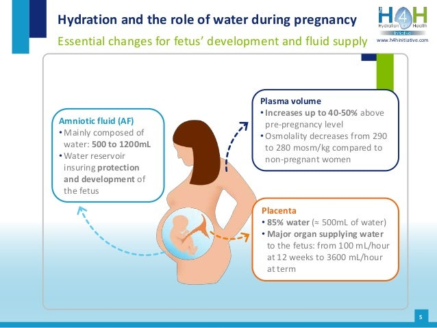 5 Hydration and the role of water during pregnancy Essential changes for fetus' development and fluid supply www.h4hinitia...