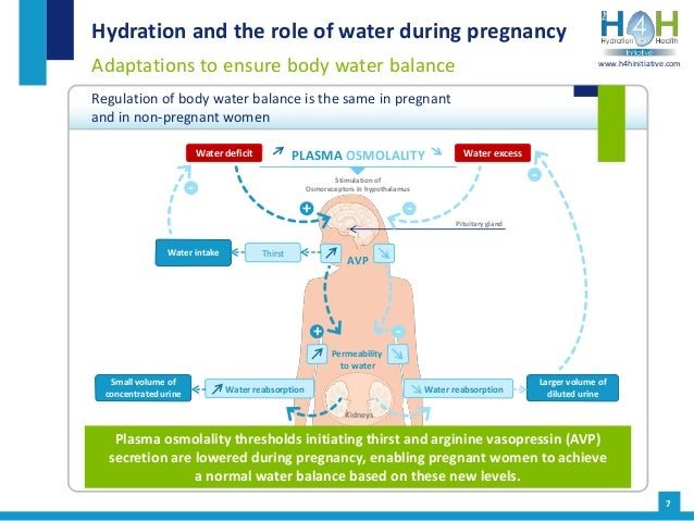 Hydration and the role of water during pregnancy Adaptations to ensure body water balance Regulation of body water balance...
