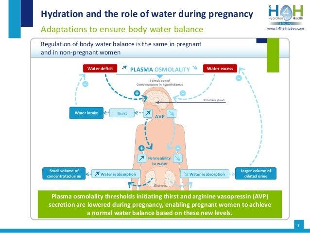 Hydration in pregnancy and breastfeeding