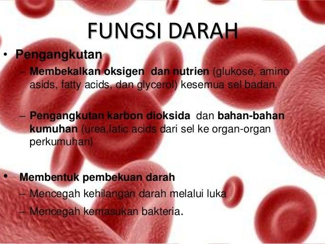 Darah anatomi fisiologi edit3