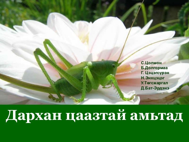 С.Цолмон                Б.Долгормаа                Г. Цэцэгсүрэн                Н.Энхцэцэг                У.Төгсжаргал    ...