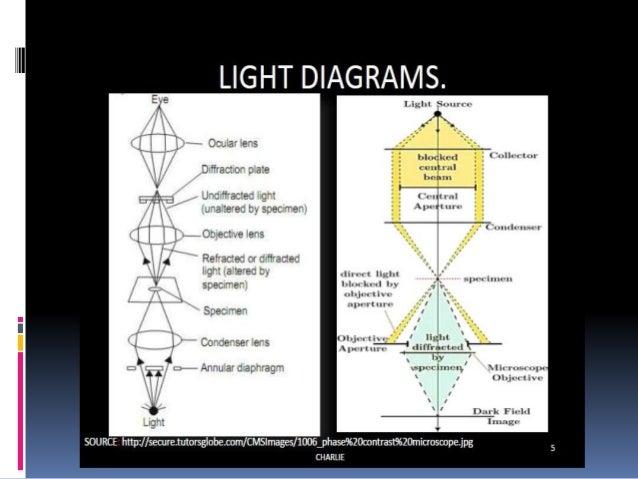 Dark field microscope 7 principle the dark ground microscope ccuart Images