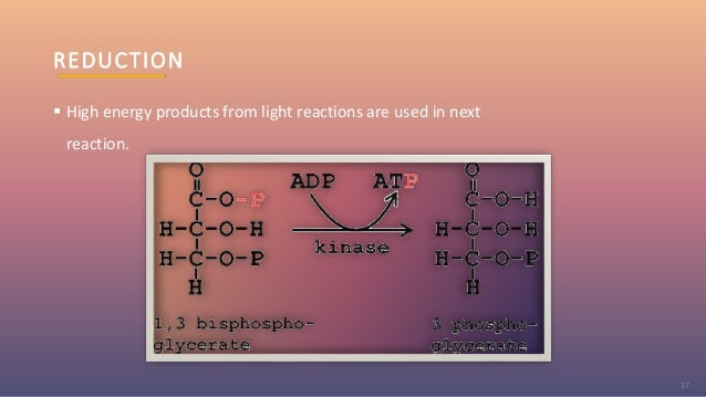REDUCTION  High energy products from light reactions are used in next reaction. 17