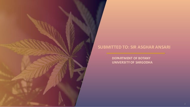 2 DEPARTMENT OF BOTANY UNIVERSITY OF SARGODHA SUBMITTED TO: SIR ASGHAR ANSARI