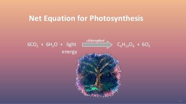 27 Net Equation for Photosynthesis 6CO2 + 6H2O + light C6H12O6 + 6O2 energy chloroplast