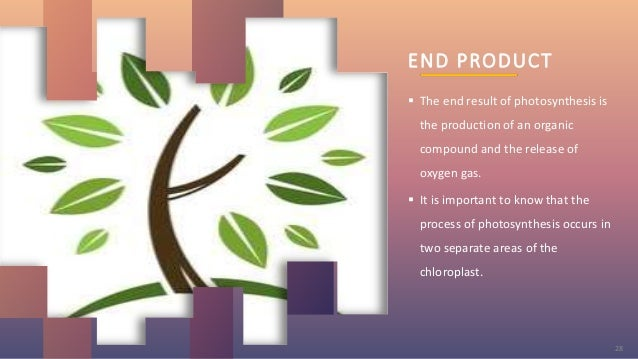 END PRODUCT  The end result of photosynthesis is the production of an organic compound and the release of oxygen gas.  I...